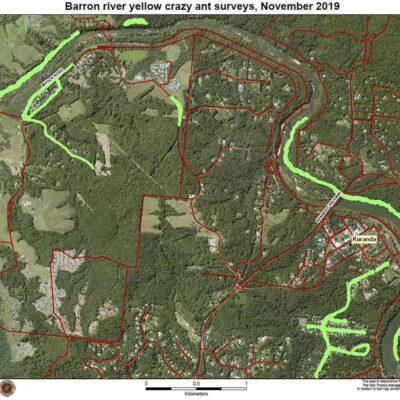 Barron-river-yellow-crazy-ant-surveys,-November-2019