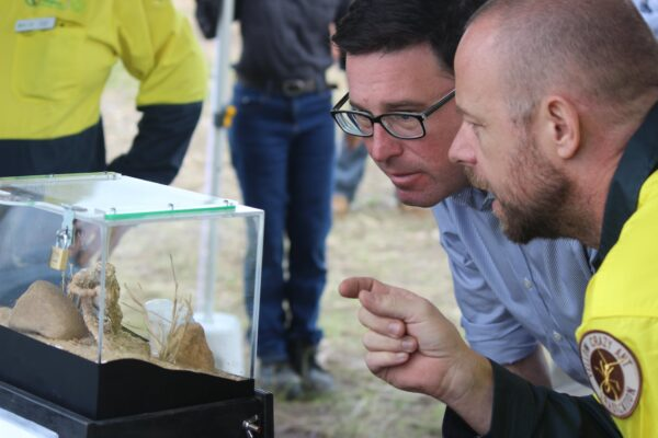 The Minister gets up close with yellow crazy ants
